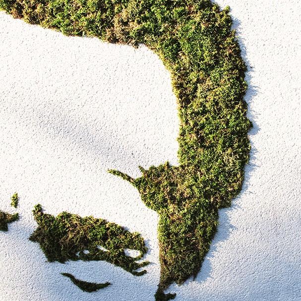 graffiti végétal par Kevin Le Gall